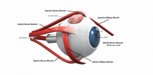 eye muscle spasm