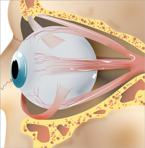 extrinsic eye muscles