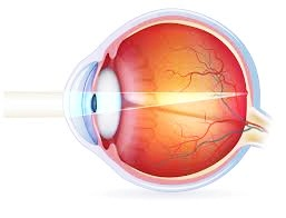 eye parts and functions